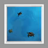 Ceiling Mural kf-se-df060_4x4md_r44 de David Fleetham